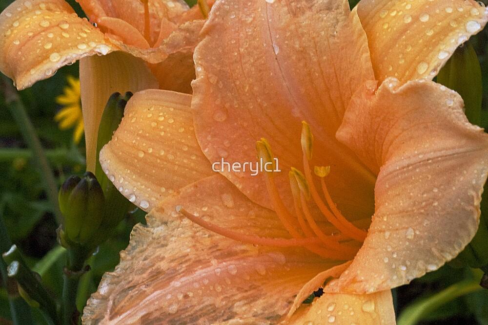 Jens flower by cherylc1