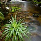 Douglas Creek and Pandani by tasadam