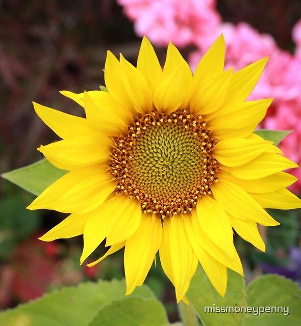 Pretty little sunflower by missmoneypenny