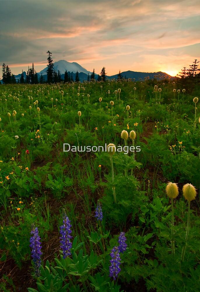 Rainier Wildflower Light by DawsonImages