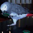 Falco 1 by Essenique
