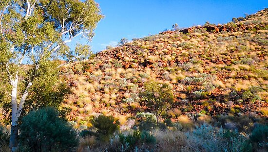 Tufts of Colour - Kings Canyon  by Lexa Harpell