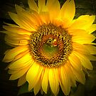 Sunflower and Bee by ienemien