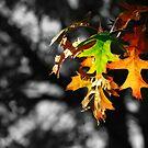 Distinct Autumn by HeatherEllis