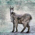 Mountain Goat by Kimberly Palmer
