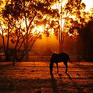 Feeding at Sunset by Clive