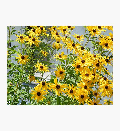Susans In The High Line Photographic Print
