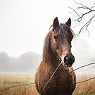The Horse by Aiin Ojani