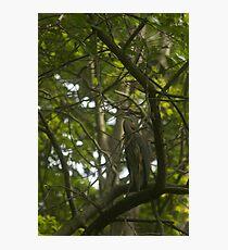 Watchful Eye - Great Blue Heron Photographic Print