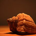 Shell - sepia by Earl McCall