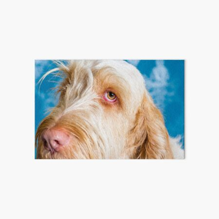 Delicate thoughts Spinone Art Board Print