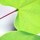 leaves by Sheila McCrea