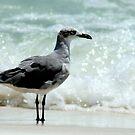 sea gull by Sheila McCrea