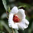 pretty flower by Sheila McCrea