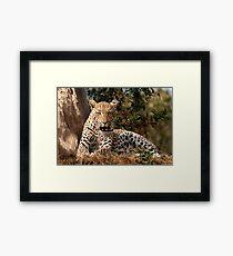 Leopard in waiting Framed Print