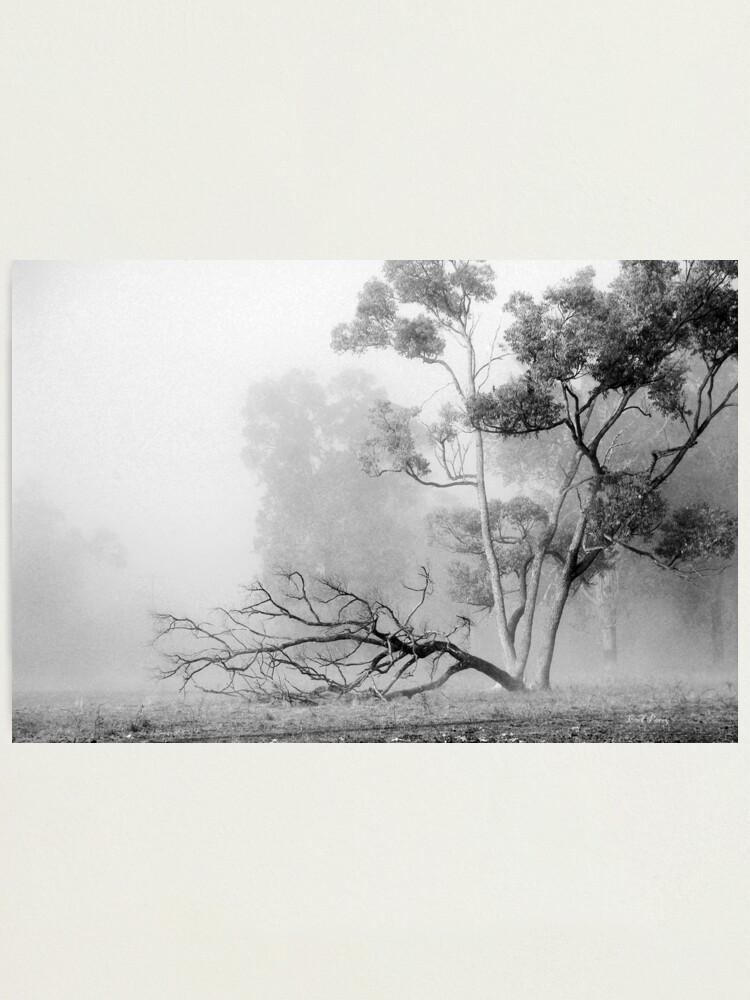 Alternate view of Misty Paddock Photographic Print