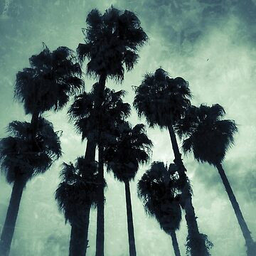 Silhouette of palm trees by Yomanow