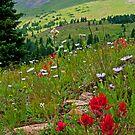 Colorado by Gary Lengyel