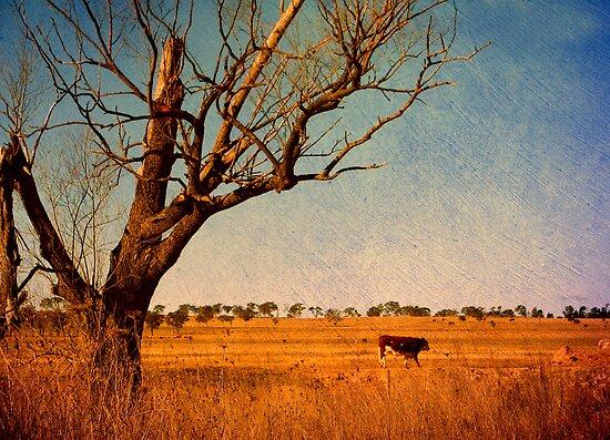 Cattle Country - Uralla, Northern Tablelands, NSW, Australia by Kitsmumma