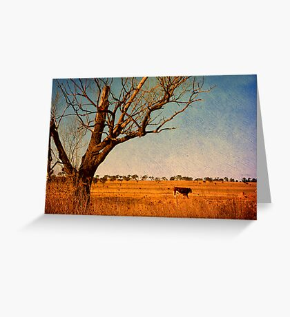 Cattle Country - Uralla, Northern Tablelands, NSW, Australia Greeting Card