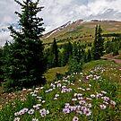 Colorado Backcountry by Gary Lengyel