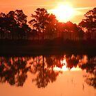 Sunrise Reflected by Rosalie Scanlon