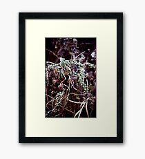 022107-45 FROST      Framed Print