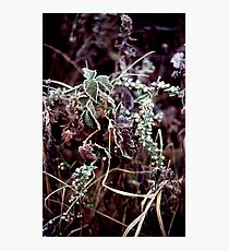 022107-45 FROST      Photographic Print