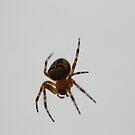 Translucent Spider by zahnartz