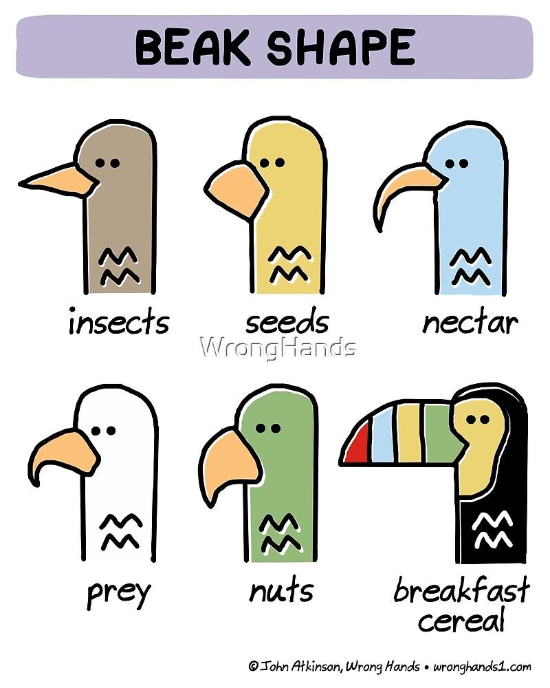 beak shape by WrongHands