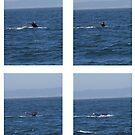 Ocean Wave Sequence by Greg Schroeder