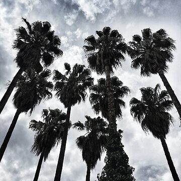 Palm trees and a cloudy sky by Yomanow