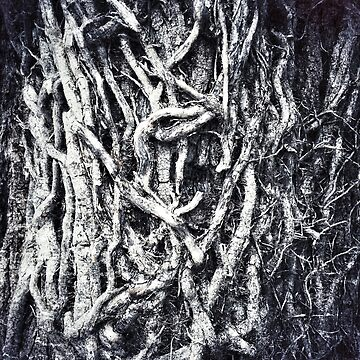 Textured dry roots by Yomanow