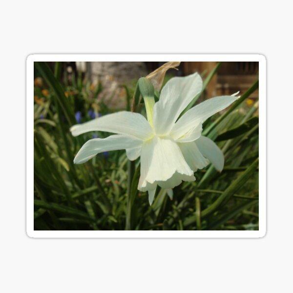 Thalia Spring Dream Sticker