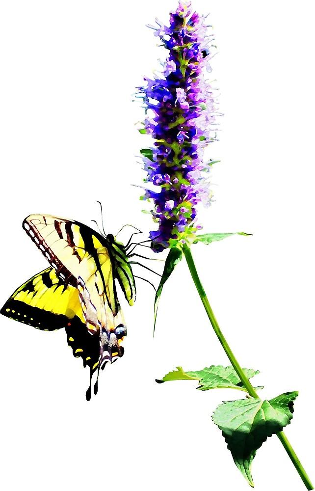 Tiger Swallowtail on Purple Salvia by Susan Savad