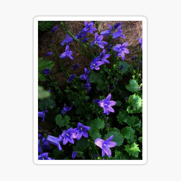 Colorado Flora Blue Campanula Sticker