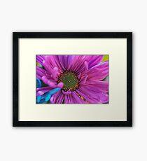Purple Daisy Close Up Framed Print
