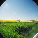 prairies by veneer
