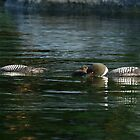 Loon Family  by Heather King