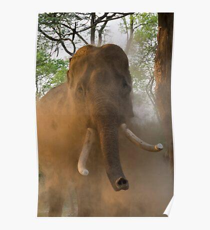 Elephant Dust Bath Poster