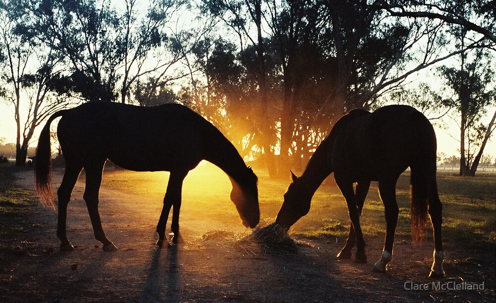 dawn horses by Clare McClelland