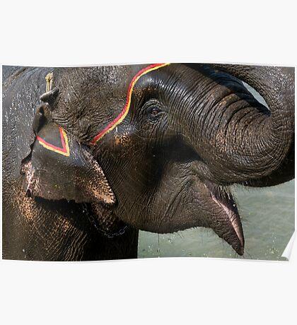 Elephant Bath, Nepal Poster