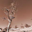Lone Tree by NancyC