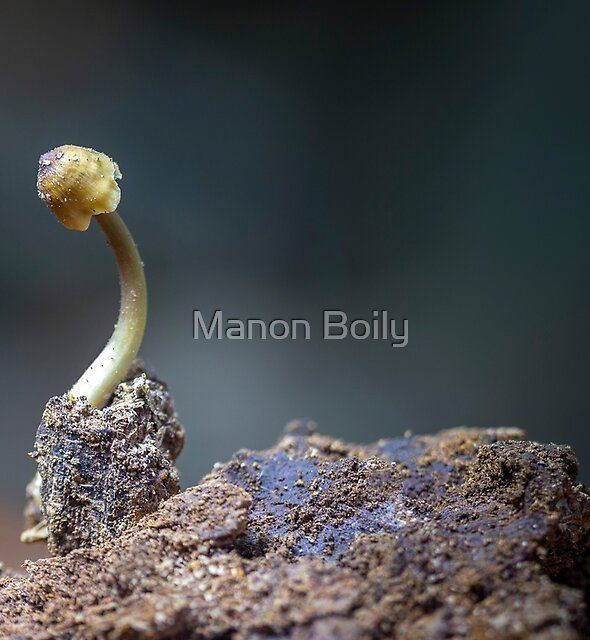 Reverence by Manon Boily