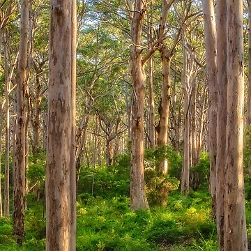Forest Twilight, Boranup Forest by MADCAT