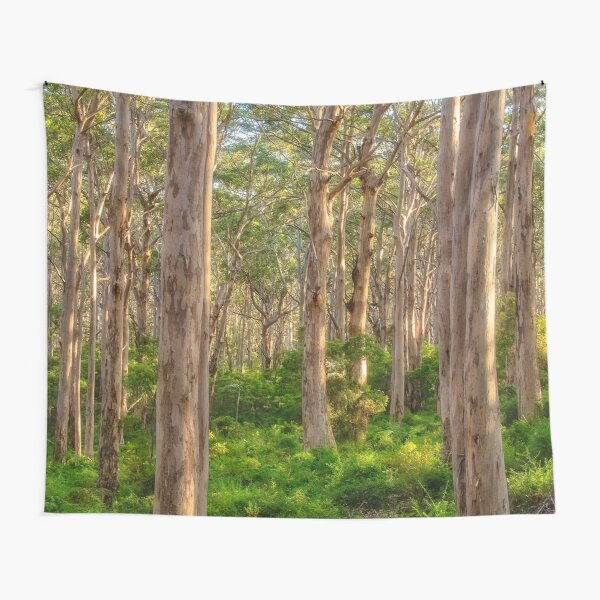 Forest Twilight, Boranup Forest Tapestry