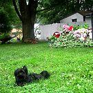 Poochie In the Yard by Linda Miller Gesualdo