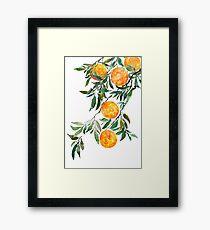 orange watercolor Framed Print