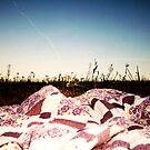 Spring Picnic by ChrystalLiena
