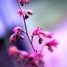 Coral bells by Sheri Nye